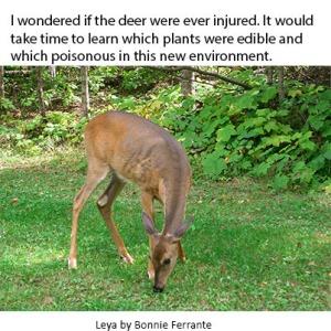 leya deer